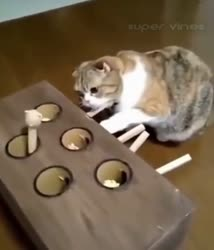 Cat Playing With Game