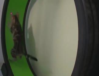 Cat Running Circle Funny Viral