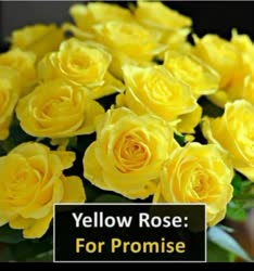 Red rose for love yellow rose for promise