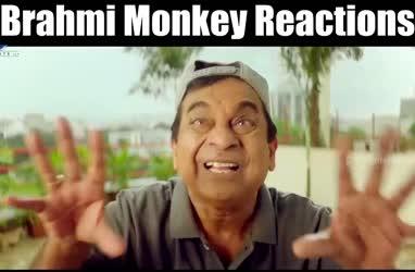 Brahmi Monkey Reactions`